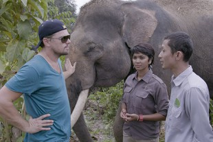 Before the Flood. INDONESIA- Leonardo DiCaprio guarda gli Orangutanghi nel Leuser Ecosystem