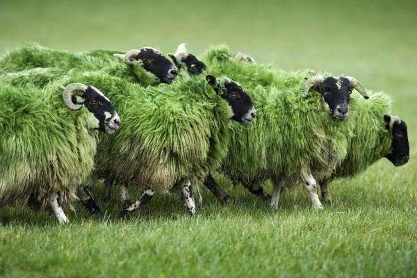 San Patrizio, 17 marzo la festa irlandese che piace a tutto il mondo