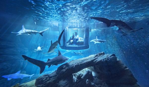 una notte tra gli squali, la stanza nel blu dell'acquario a parigi ... - Camera Da Letto Blu Notte