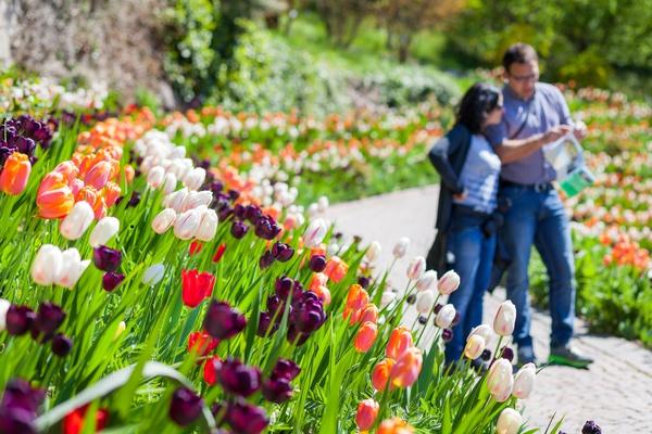 Tra tulipani e azalee 0501300c432