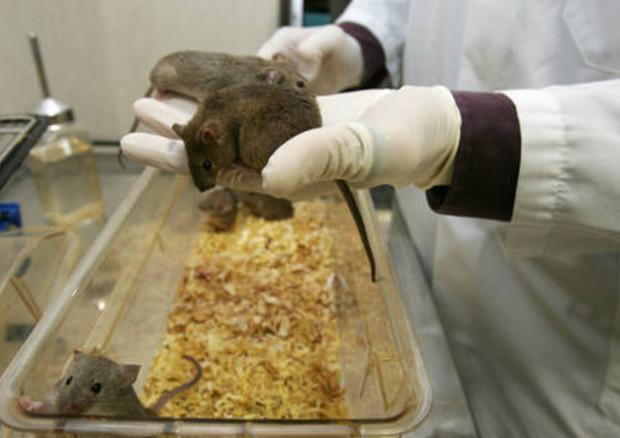In Italia calo del numero di animali utilizzati per la vivisezione