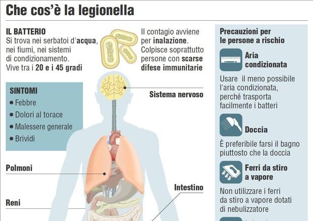 Nell'infografica realizzata da Centimetri la scheda della Legionella © ANSA
