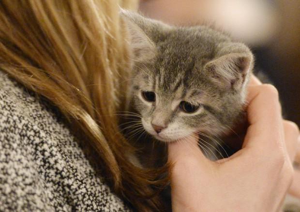 Censis,italiani secondi in Ue per possesso animali domestici © ANSA