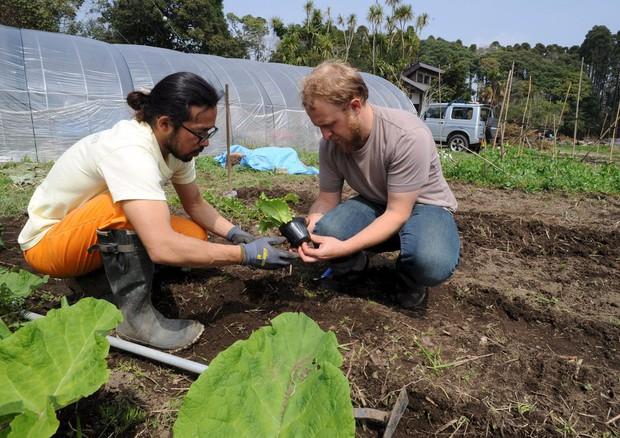 Banca delle Terre: a Gioia due terreni per giovani agricoltori