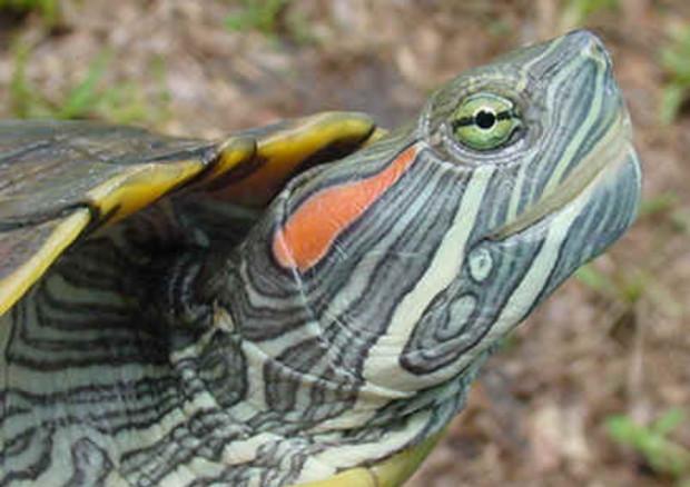 Scatta il giro di vite per le specie invasive in Italia