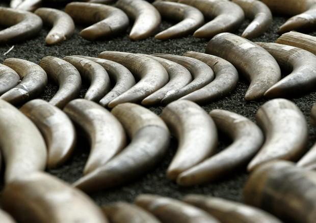 Dal Wwf Sos anti-bracconaggio, uccisi 30mila elefanti l'anno © EPA