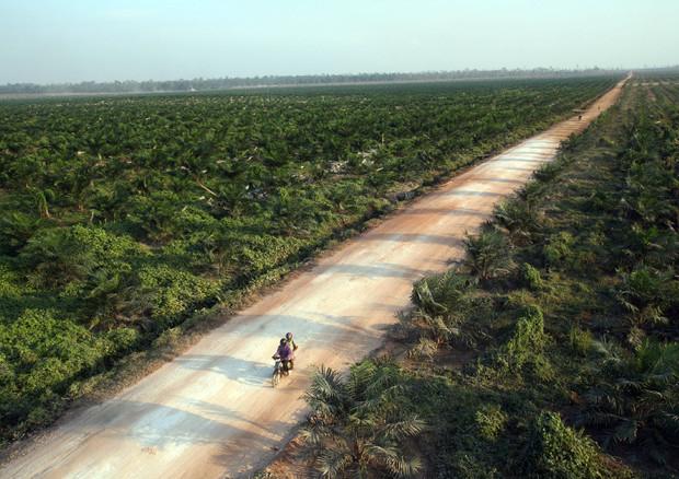 Consiglio malese olio palma, Italia fermi campagne dannose