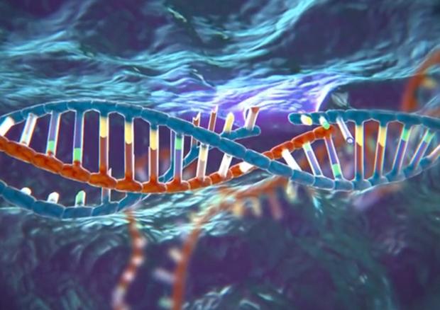 Rappresentazione artistica della forbice molecolare, ossia del sistema di difesa Crispr utilizzato dai batteri (fonte: McGovern Institute for Brain Research at MIT) � Ansa