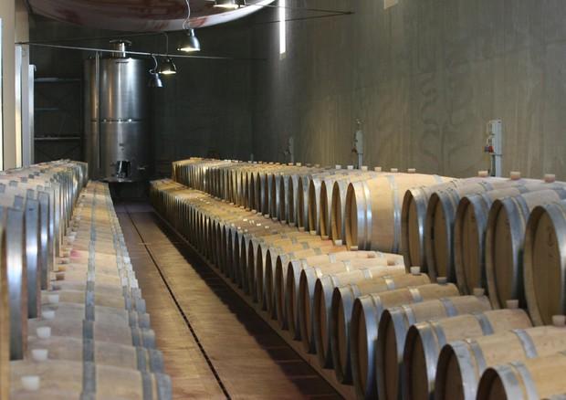 Approvato il Testo Unico per il vino. Agostini: