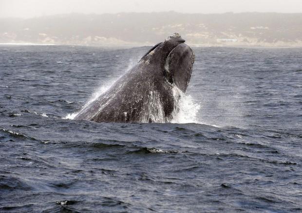Vuoi salvare le balene? Guarda un porno