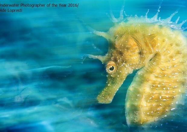 Italiano vince concorso inglese di fotografia subacquea