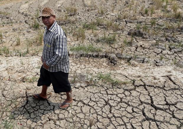 Giornata mondiale alimentazione, Mipaaf-Fao: memorandum per tutela patrimonio agricolo