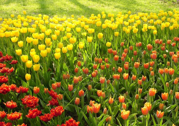 Le più belle fioriture della primavera 2016 - Natura - ANSA.it dcdaaad6f14
