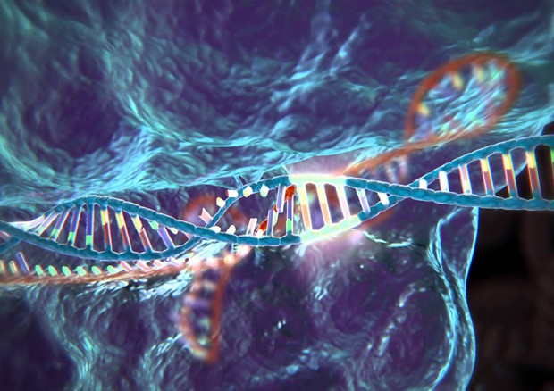 La Crispr, è la tecnica che permette di riscrivere il Dna con un taglia-incolla (fonte: McGovern Institute for Brain Research, MIT) © Ansa