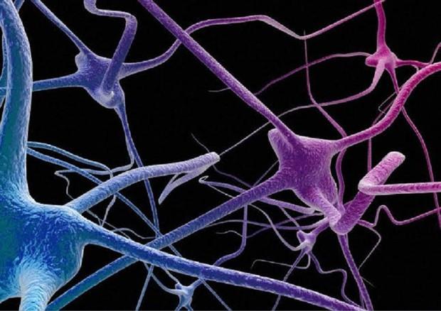 Nel sistema nervoso ci sono cellule immunitarie che 'ricordano' il dolore (fonte: Maurizio De Angelis, Wellcome Images) © Ansa