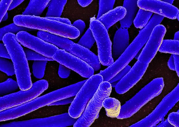 Resistenza agli antibiotici, in Italia 450.000 morti entro il 2050 © Ansa