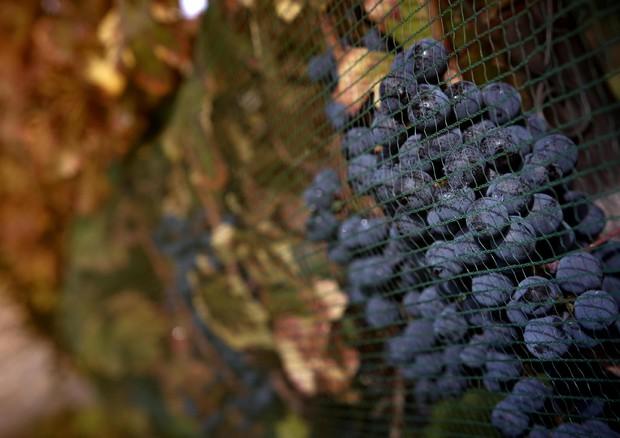 Produzione mondiale vino tra le più basse degli ultimi 20 anni
