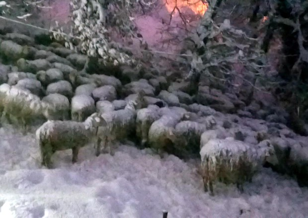 Risultati immagini per neve terremotati