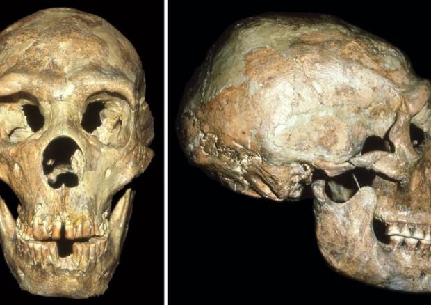 Il cranio di Shanidar, il neanderthaliano sopravvissuto grazie all'aiuto dei suoi simili. Visibili i segni di un colpo violento, probabilmente ricevuto quando era giovanissimo (fonte: Erik Trinkaus) © Ansa