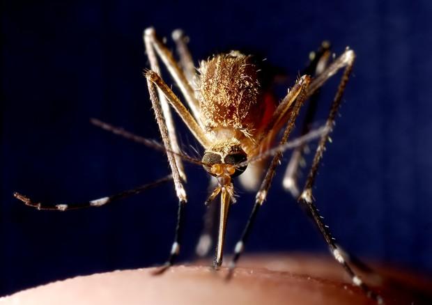 Taranto, quattro braccianti hanno contratto la malaria: sono in isolamento in ospedale