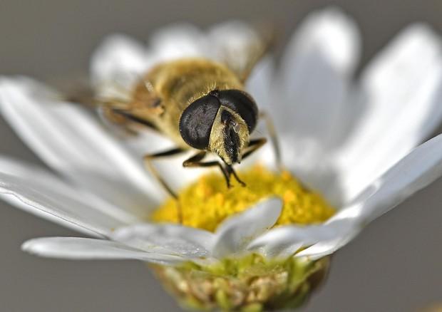 I neonicotinoidi nel miele di tutto il mondo