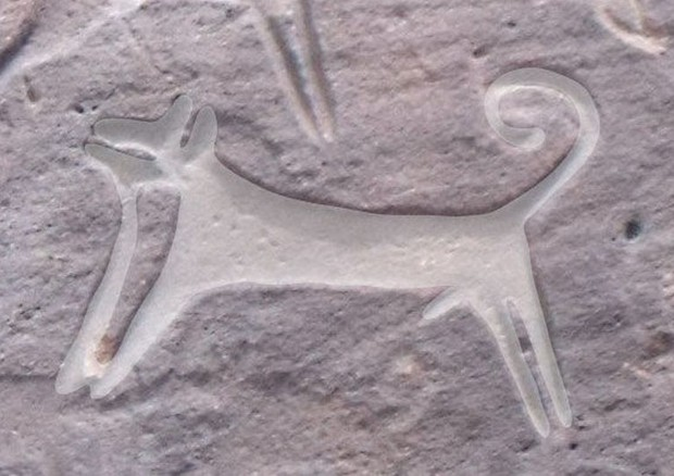 Il primo ritratto di un cane (fonte: M. Guagnin et al. Journal of Anthropological Archaeology) © Ansa