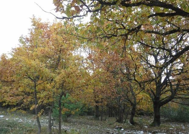 Giornata nazionale degli alberi e riqualificazione del verde urbano a Reggio