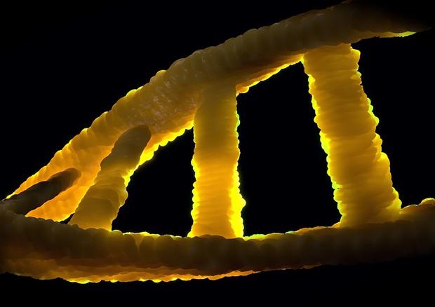 Una mutazione nel meccanismo di riparazione delle cellule può scatenare nel Dna il caos che porta ai tumore (fonte: Pixabay) © Ansa