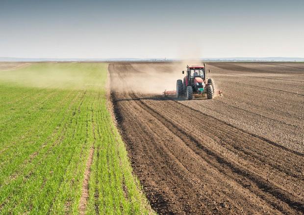 Italia primo paese Ue per valore aggiunto in agricoltura © ANSA