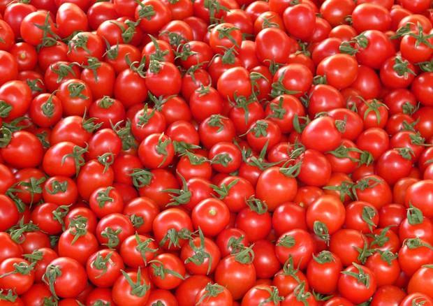 Confermati benefici pomodoro in prevenzione malattie cuore © Ansa
