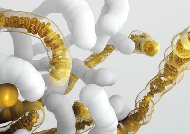 Più vicino il primo genoma sintetico (fonte: V. Altounian/Science) © Ansa
