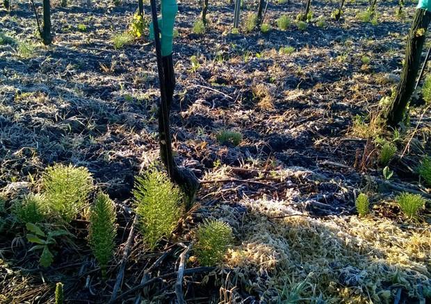 Grandine, freddo e siccità: gravi danni a vigneti, frutteti e ortaggi