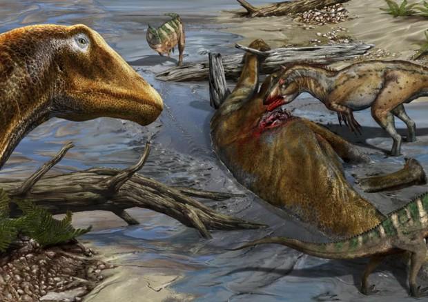 Galeamopus pabsti nuova specie dinosauro