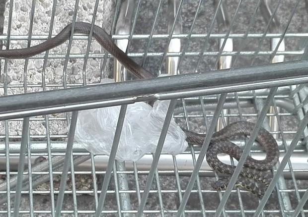 Milano: serpente di un metro e mezzo in un carrello, paura all'Esselunga