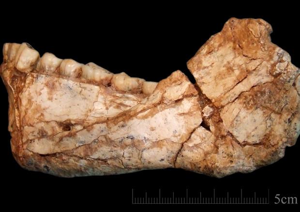 Il frammento di mandibola di Homo Sapiens trovato in Marocco (fonte: Jean-Jacques Hublin, MPI-EVA, Leipzig) © Ansa
