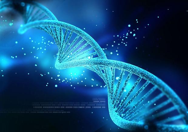 Tentativo di modificare i geni direttamente all'interno del corpo per curare una malattia metabolica © Ansa