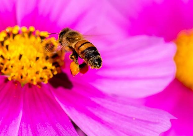 Anche le api comprendono il concetto di zero (fonte: Danny Perez Photography) © Ansa