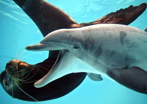 In gazzetta via libera al nuoto nei delfinari protesta - Bagno coi delfini ...