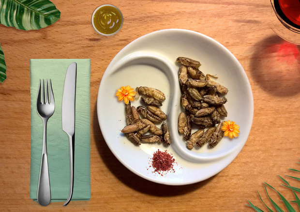 Nessun insetto autorizzato nei menu, Ministero precisa © ANSA