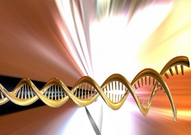 La tecnica che permette di tagliare e riscrivere precise sequenza del Dna sta aprendo la strada a numerose applicazioni nelle biotecnologie e nella biomedicina (fonte: Wellcome Images) © Ansa