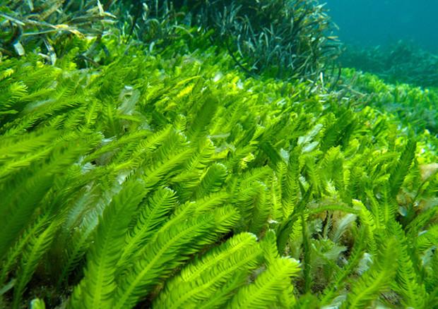 Dalla Sardegna il progetto per coltivare e sfruttare le alghe