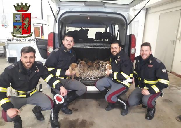 Trasportano illegalmente sull'A1 26 cuccioli, denunciati da Polstrada