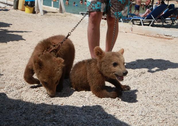 FOTO. , RIPRODUZIONE RISERVATA. +CLICCA PER INGRANDIRE. ROMA , Tre cuccioli  di orso bruno