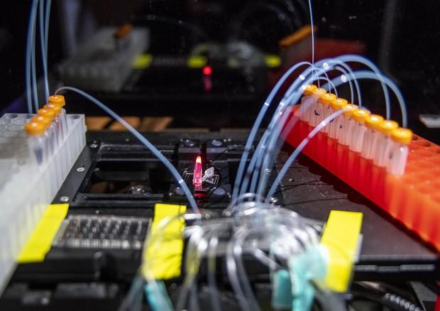Si basa su un enzima umano la tecnica rivoluzionaria che permette di produrre in laboratorio lunghe sequenze di Dna  in modo più sicuro e facile (fonte: Marilyn Chung, Berkeley Lab) © Ansa