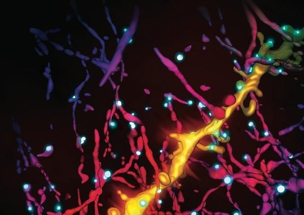Scoperto il meccanismo della Serotonina la molecola della felicità