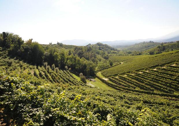 L'Unesco boccia le colline del Prosecco: candidatura respinta