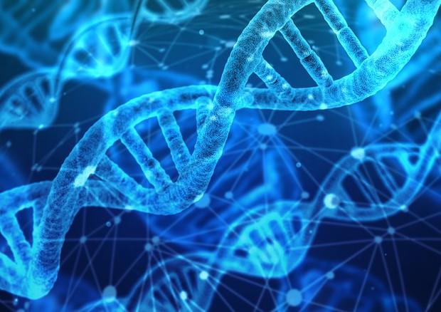 La molecola a doppia elica del Dna (fonte: Pixabay) © Ansa