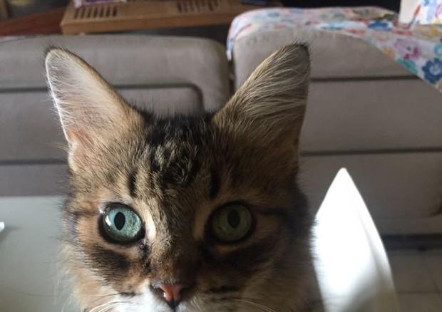 Un gatto © Ansa