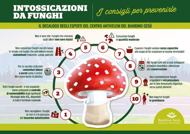 Funghi velenosi, un vademecum per non correre rischi
