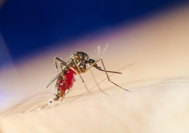 La febbre gialla causa ogni anno 200 mila casi e 30 mila morti © Ansa